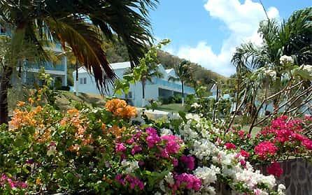 Ground foliage, Timothy Beach Resort, St Kitts